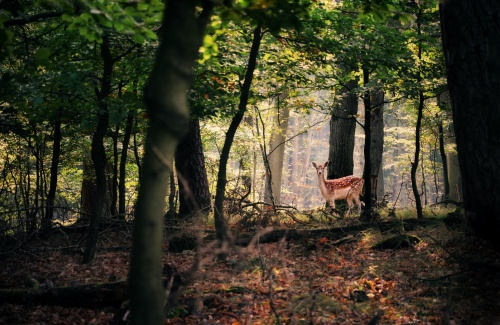 deer in a forest in daylight