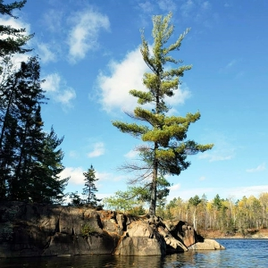 lone tree near lake