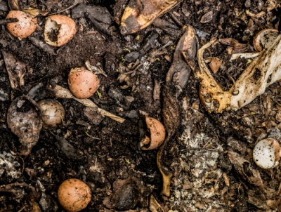 food scraps on dirt