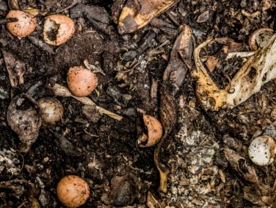 food scraps on dirt
