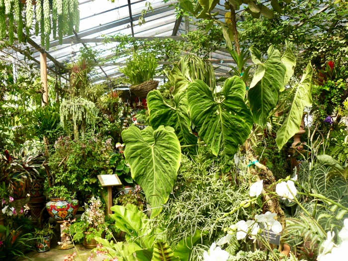 wall of plants in the puerto vallarta botanical gardens