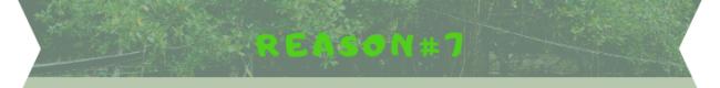 reason 7 banner