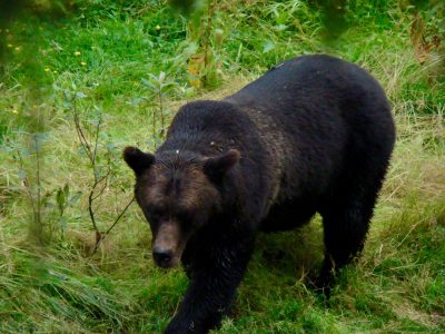 black bear on grass