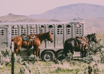 two horses near a horse wagon