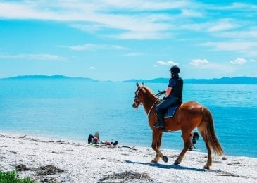 horse and horse rider on a beach